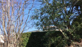 M様邸 庭木の剪定